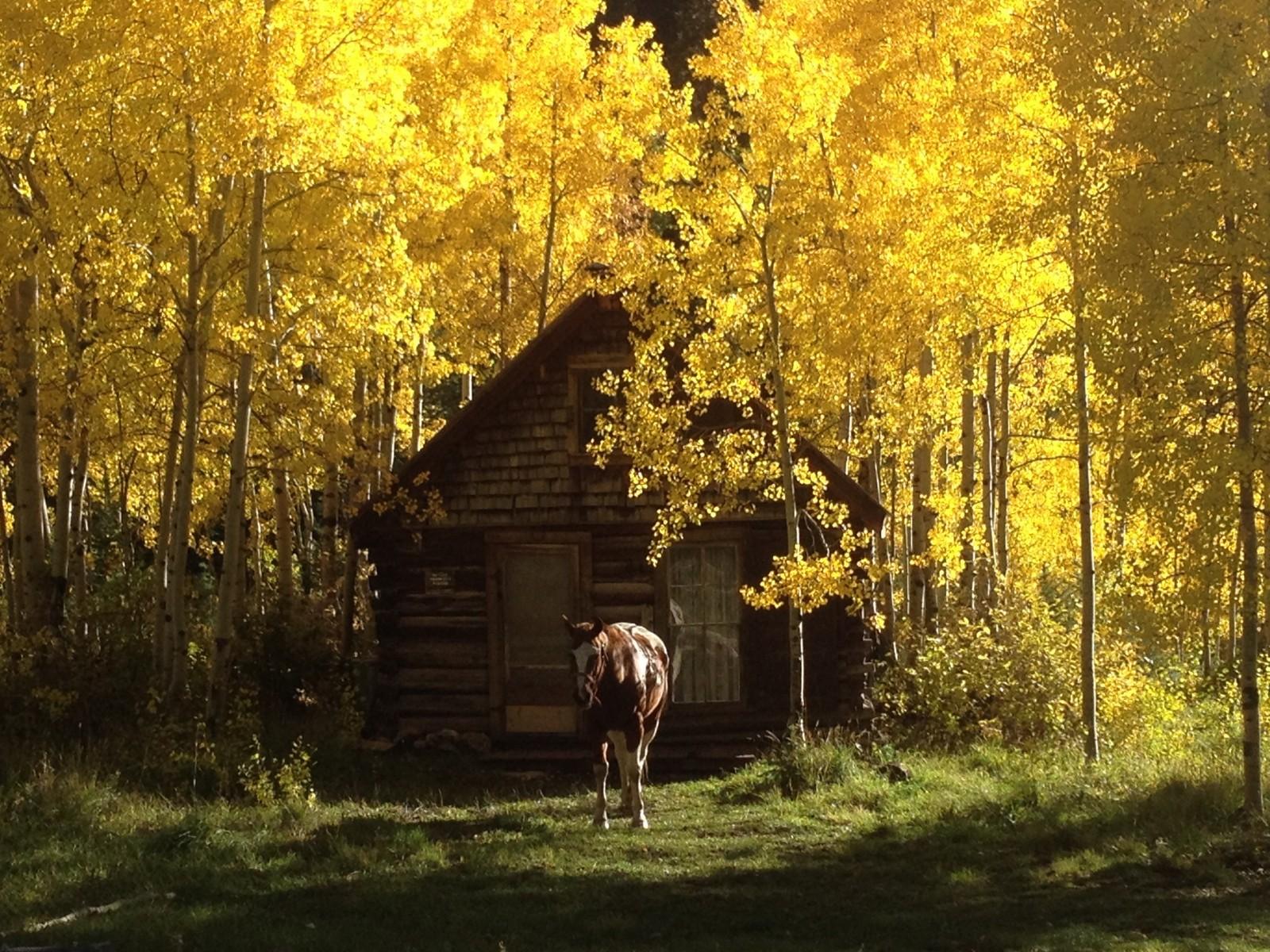 Horseback Riding, Colorado
