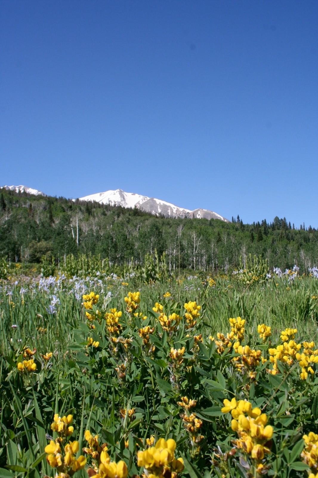Wildflower Hiking, Crystal Valley, Colorado